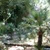 Градина в Гърция