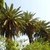 Градина с палми