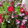 Цветя от Гърция