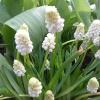 Цветята на Keukenhof