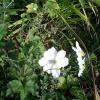 Цветята отблизо