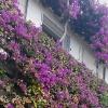Фасада от цветя