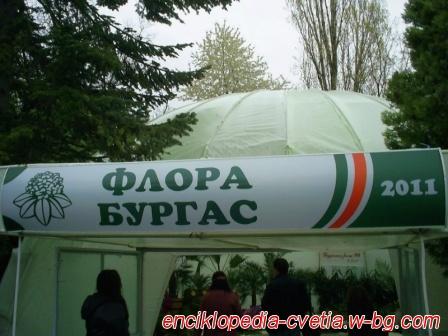 Флора Бургас 2011