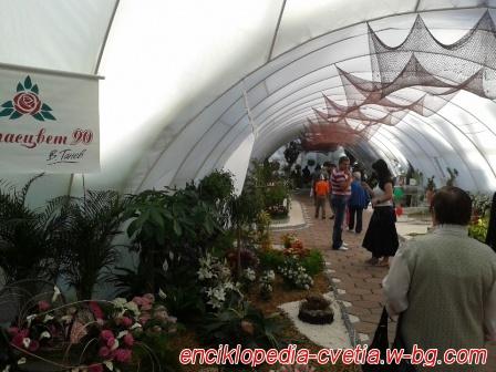 Флора Бургас 2013