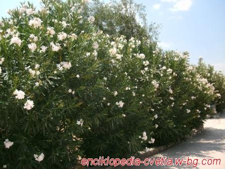 Цъфтяща градина - Гърция