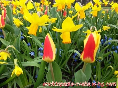Цветя / градини