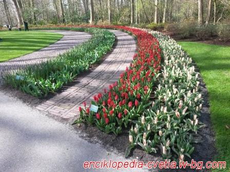 Градините на Keukenhof