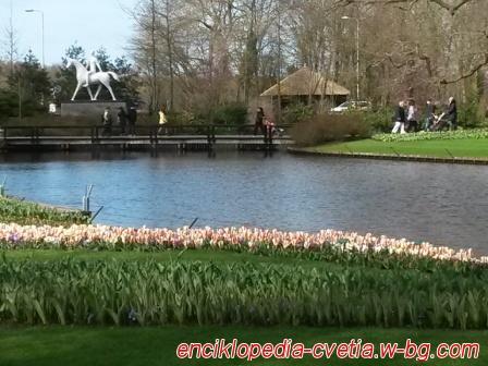 Keukenhof - Холандия