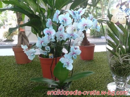 Цветя - Флора