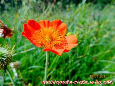 Цветята в планината 3